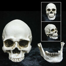 Big Human Skull Replica Model Anatomical Medical Life-size Skeleton Head Teeth