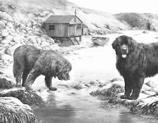 More details for mike sibley whistlers cove - newfoundlands newfies working dogs canine prints