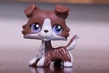 *Littlest Pet Shop* LPS #NO Brown chocolate Collie Puppy Dog w/ Purple Eyes