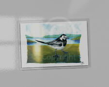 Pied Wagtail art picture magnet. Acrylic magnet contains print. 9.5cm x 6.5cm