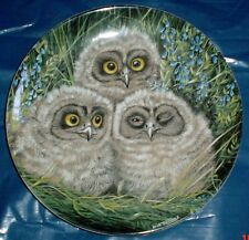 Wedgwood Collectors Plate SHORT EARED OWL CHICKS - THE BABY OWLS