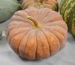 Seeds Pumpkin Muscat De Provence Giant Vegetable Organic Heirloom Russia Ukraine