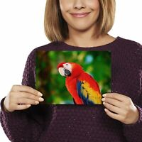 A5 - Scarlet Macaw Parrot Bird Print 21x14.8cm 280gsm #2022