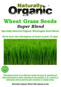 * 500G - 2KG ORGANIC WHEATGRASS SEED BLEND SELECTED FOR MAXIMUM GROWTH **