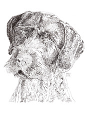 German Wirehaired Pointer Cards 10 Cards
