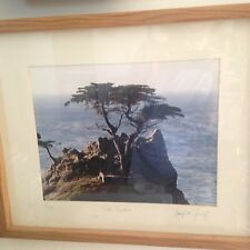 Lone Cypress; original photograph, matted and framed; 1988