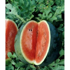 100 Seeds Florida Giant Watermelon Seeds new seed for 2017 Heirloom Non-Gmo