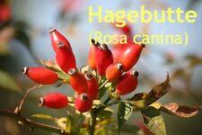 ***Hagebuttenöl, Wildrosenöl (Rosa mosqueta) kbA, 100ml, Hautpfl.