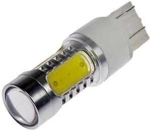 Tail Light Bulb fits 2012-2014 Volkswagen Beetle  DORMAN - CONDUCT-TITE