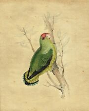 Original large Victorian watercolour painting of a green parrot