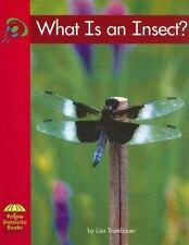 What Is an Insect? (Yellow Umbrella Science)