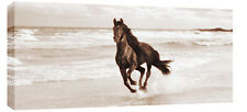 "LARGE HORSE ON SEA CANVAS  PICTURE BROWN SEPIA 44""x20"""