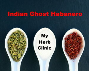 INDIAN GHOST CHILLI CHILI POWDER 10g XXX HOT HABANERO FAST FRESH & FREE POSTAGE