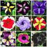 Beautiful Petunia Flower Seeds Plants 24 Kinds Of Can Choose Bonsai Rare 100pcs