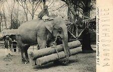 """Carl Hagebeck`s Tierpark, Grosse Schaustellung """"Indien"""" mit Elefante, um 1910/20"""