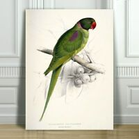 "EDWARD LEAR - Hooded Parakeet - CANVAS ART PRINT POSTER - Bird - 24x16"""