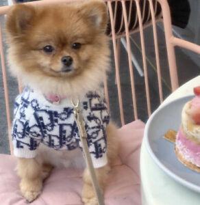 Designer Dog clothes Cute Jumper Puppy Pet Fashion Clothing  S-XL