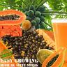 Rare! Dwarf Waimanalo Papaya High Quality Seeds tropical fruit Red & Yellow