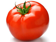 30 ABE LINCOLN TOMATO 2020 (all non-gmo heirloom vegetable seeds!)