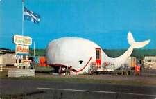 Matane Sur Mer Quebec Canada Sirois Trailer Park Camp Whale Postcard J77120