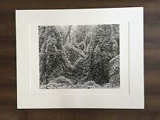 """BRUCE BLUM SIGNED Black and White Photo Print (22""""X 28"""")-""""Kudzu """""""