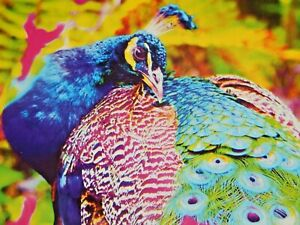 100 Pc Puzzle Puzzlebug Beautiful Peacock Up Close Jigsaw Puzzle