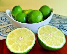 Lemon Lime Fruit Tree 1'-2' Tall