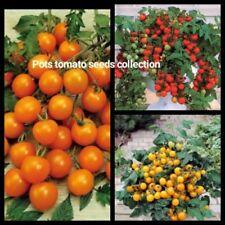 Patio Balcony Tomato Seeds Collection Indoor Outdoor Yellow Red Orange