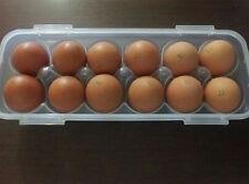 New Lock &Lock Clear, Plastic Egg Airtight Storage container Fresh Egg Box 900ml