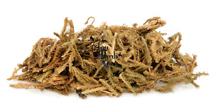 Chinese Club Moss Dried Flowers Herbal Tea 25g-200g - Huperzia serrata