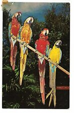 4 Colorful Macaws Parrots Birds Tropical Postcard Unused
