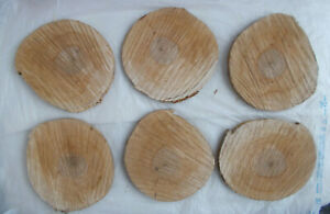 """Aged Cured Wood Slices 6 PACK 8"""" x 1/2"""" Raw Edge No Bark Crafts Rustic Decor"""