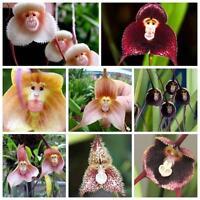 100pcs Monkey Face Orchid Flower Seeds Plant Seed Bonsai Home Garden op