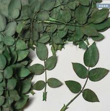 100 Pressed Dried Rose Leaf Flower Plant Herbarium Phone Case Craft DIY Jewelry