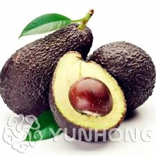10pcs New Rare Green Avocado Seed Very Delicious Pear Fruit Easy Grow For Home G
