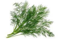 150 Graines non traitées d' Aneth Anethum graveolens Insecticide bio au potager