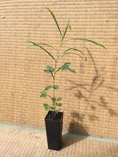 Spring Watering 3 (-5 to 0 ° C) Plants, Seeds & Bulbs