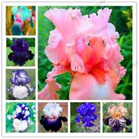 100 PCS Seeds Iris Bonsai Flowers Plants Variety Complete Mixed Colors Garden R