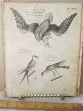 Vintage Print,EAGLE,Dictionary Arts+Science,1771