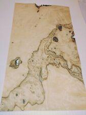 Olive Ash Burl Wood Veneer 9 X 16 With No Backing Raw Veneer 142 Thickness