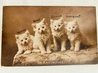 Antique Real Photo Postcard The Aristocrats 4 Cute Cats/Kittens RPPC Post-M 1910