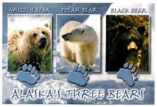 Alaska's Three Bears Postcard Grizzly Polar Black Paw Prints Snow