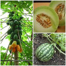 Angebot Melone Wassermelone Papaya Samen Saatgut fruchtig exotisch