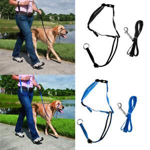 Pet Dog Head Collar & Training Leash Nylon Adjustable Dogs Lead Rope Flexible