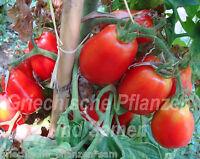 🔥 🍅 SPITZE Flaschen-Tomate ** Pasta-Tomaten RAR ** 10 Samen