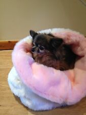 CHIHUAHUA BED CREAM LUXURY FAUX FUR RED FLEECE SNUGGLE SACK PET BED BAG