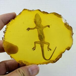 Amber Gecko Bernstein Probe Fossil Pflanze Insekt Proben Dekoration Sammlung