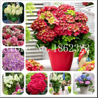 Bonsai 100 Pcs Seeds Hydrangea Flowers Mixed Plants Home Garden Planting NEW RR