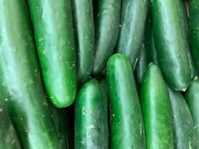 25 cucumber seeds, Usa grown, pickles, salad, easy homegrown family garden,