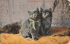 POSTCARD    CATS   The  Two  Orphans